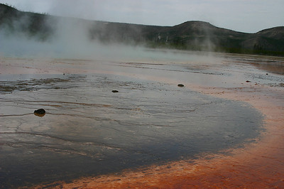 Edge of Grand Prismatic spring - with buffalo trail