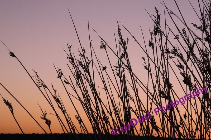'Dawning Beauty' South West of Western Australia 2007