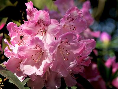 Flowers Bloemen