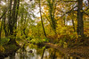 Forest of Dean LR_012