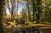Forest of Dean LR_011
