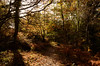 Forest of Dean LR_005