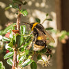 busy bees_059 lr