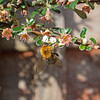 busy bees_055 lr