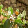 busy bees_060 lr