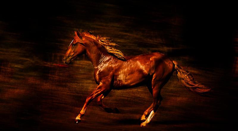 Running red colt from ranch North of Santa Fe.
