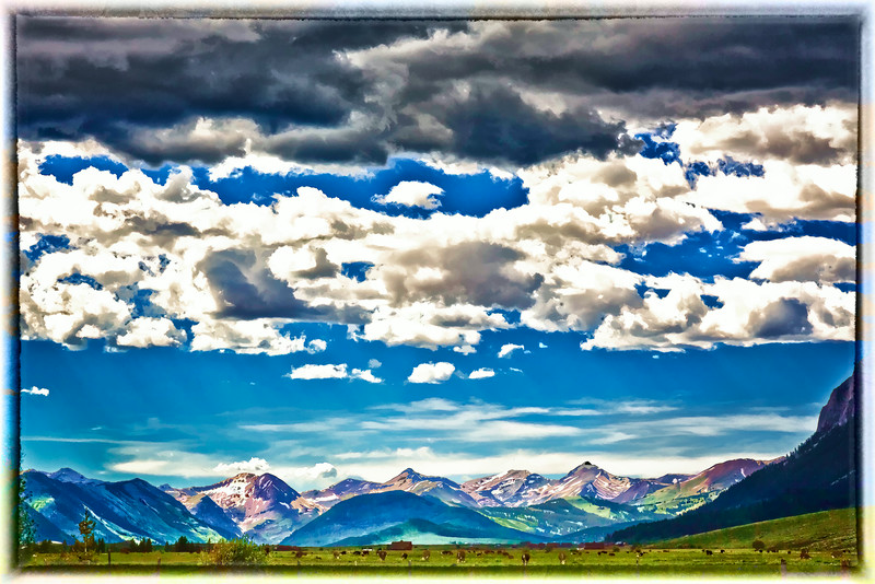 "Cows in the Crested Butte Mountain meadow in a ""watercolor"" filter for a painterly look."