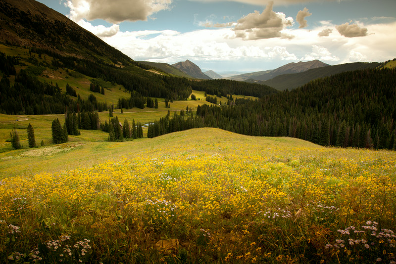 Mountain meadow, Meridian Lake, Crested Butte