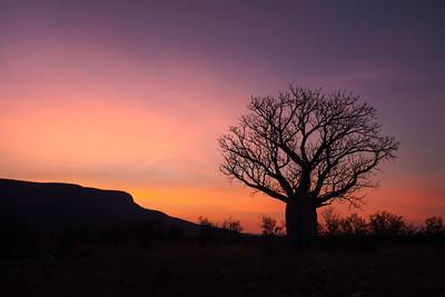 Boab Sunrise - The Kimberley, Western Australia