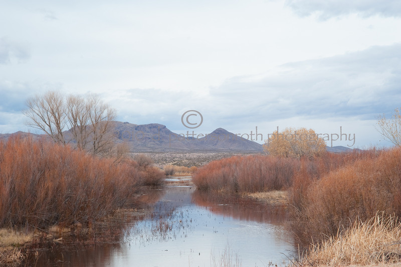 Bosque Winter---Water
