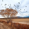 Bosque Winter---Flight