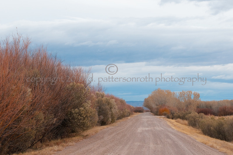 Bosque Winter---Road