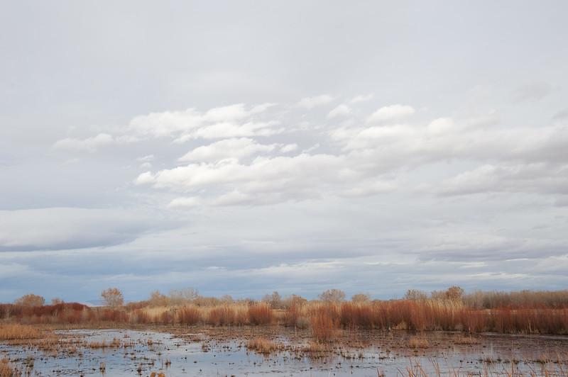 Bosque Winter---Sky