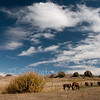 Horses grazing, Los Ojos, New Mexico