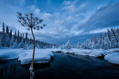 Winter in the Yukon Territory, Canada