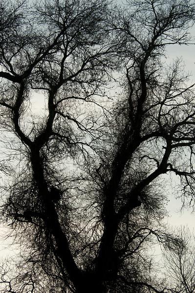 Sheryl's Shaggy Tree