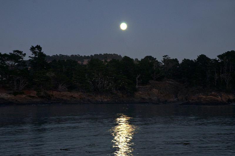 Moon over the Santa LuciasWhalers Cove. 28 egrets in the cypresses