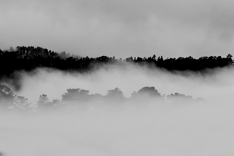 Fog at Palo Corona Ranch - Santa Lucia Mountains
