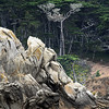 Granite and Pine