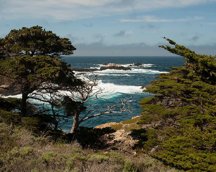 Sea Lion Rocks from Allen Grove