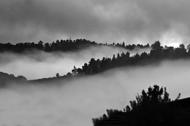Fog at Palo Corona Ranch - Santa Lucia Mountains