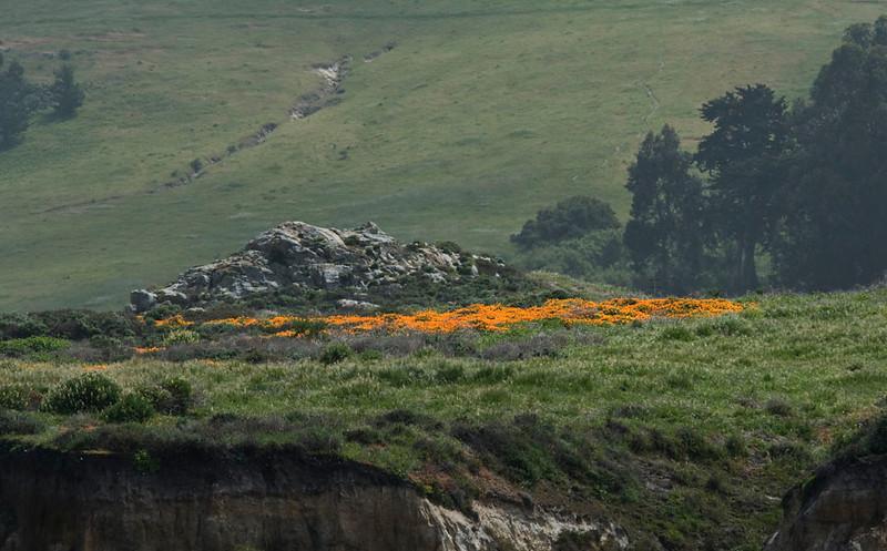 California poppies at Ixchenta Point