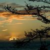 Sunset and Monterey Pine