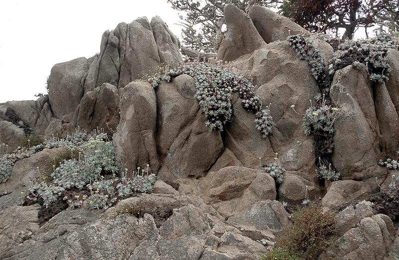 Granite and Dudleya