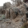 Granite and Dudleya
