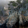 Cypress, Granite and Fog