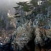 Cypress, Granite and Fog