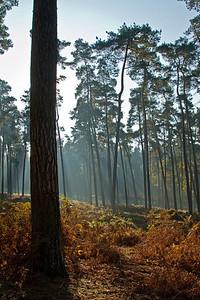 Wald_0132