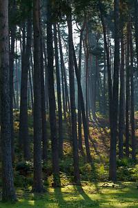 Wald_0036