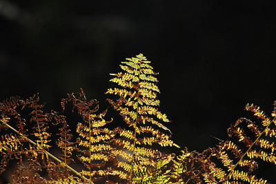 Wald_0124