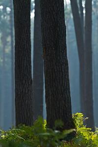 Wald_0028