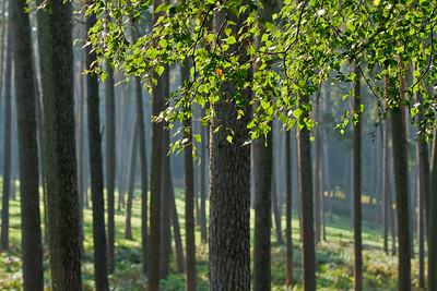 Wald_0012
