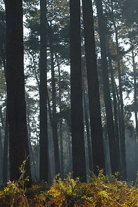 Wald_0077