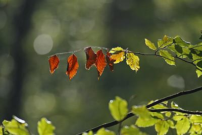 Blätter_0022