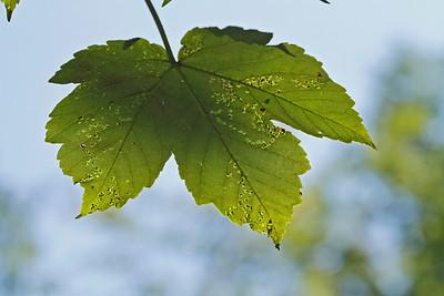 Blätter_0030