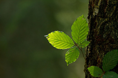 Blätter_0013