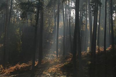 Wald_0147
