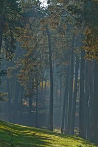 Wald_0157