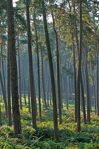 Wald_0002