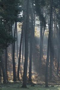 Wald_0145