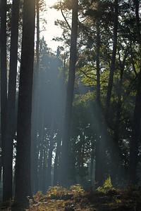 Wald_0081