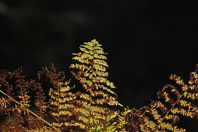 Wald_0126