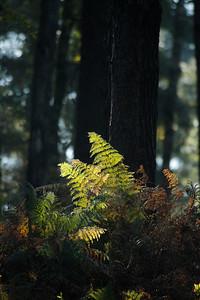 Wald_0107
