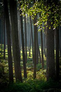 Wald_0006