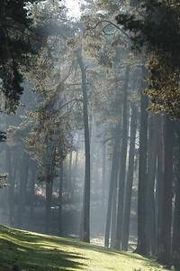 Wald_0161