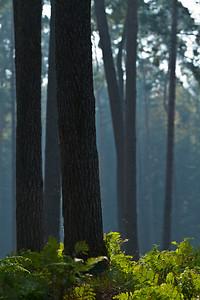 Wald_0032